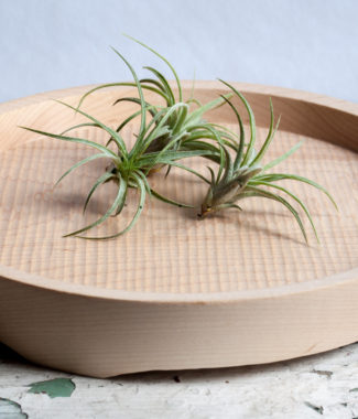 maple tray air plants